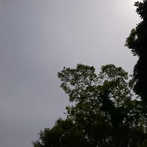 曇りのち雨っぽかったけどぉ
