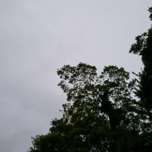 ひさびさ☔雨の1日だね
