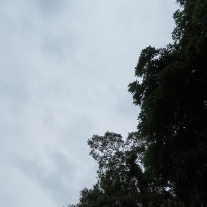 雨の合間にちらりずむ