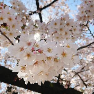 【New 4月ご予約可能日】助産師のいるサロン☆ヘッドセラピールームLuxe~リュクス~