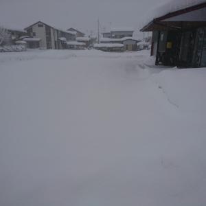今年は大雪だったΣ( ̄□ ̄|||)