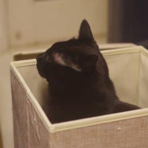 箱入り猫ちゃん
