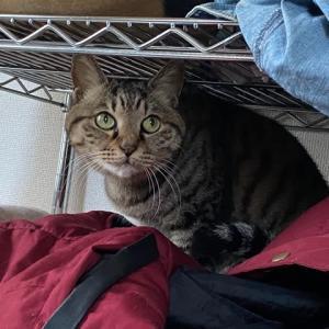 ロマンチック街道の猫ちゃん、(来世)