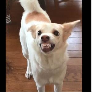 症例紹介:犬の攻撃行動①
