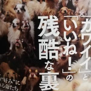 「奴隷になった犬、そして猫」読みました[前編]:動物福祉とペットの流通の闇について(2)