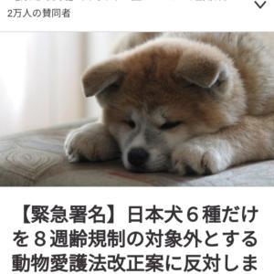 動物愛護法改正案への署名サイトが立ち上がっています