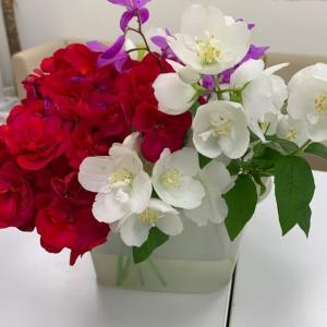 *お庭の花*