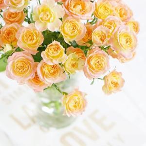 カップ咲きスプレーバラの魅力♪