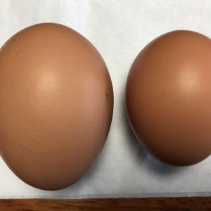 3月5日(木)の発電実績。ニワトリの卵に黄身が二つ。