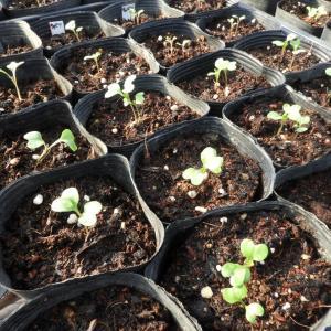 令和3年2月の月間発電実績と2月28日(日)の発電実績。葉物野菜の種蒔き