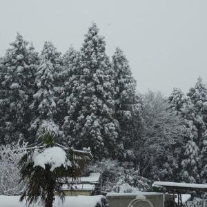 平成31年3月の月間発電実績と3月31日(日)の発電実績。春の雪。
