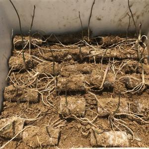 令和元年5月の月間発電実績と5月31日(金)の発電実績。今年の自然薯。