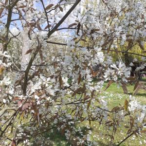残念なジューンベリーの花とウサギの穴の謎