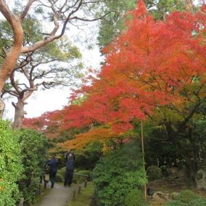 青蓮院(4)霧島の庭