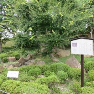勝竜寺城(3)井戸跡~明智光秀ゆかりの北門跡