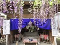 熊野の長藤2019(4)熊野御前の墓