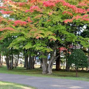 香雪園の紅葉はもう少し・・