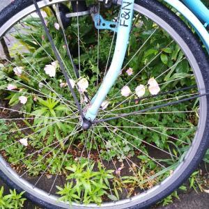 小雨の中お散歩―岐阜公園の泰山木や、界隈の紫陽花