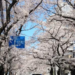 桜は変わらず・・