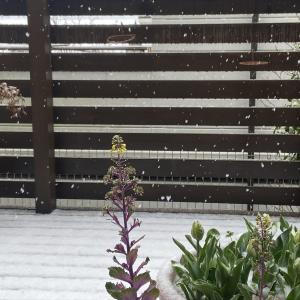 春の雪におもうこと