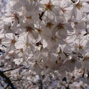 武蔵小杉4月代行