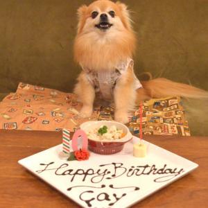 チャイの10歳Birthday♪ 当日お祝&ケーキでお祝♪ 2019/9/11、15