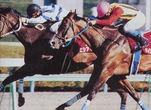 阪神大賞典の人気と枠の連対馬を判断