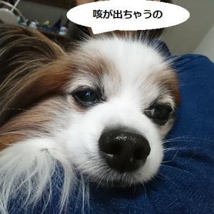 まさか、ちょっちゃんも???  (>_