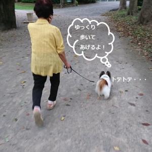 ゆっくりゆっくり (#^^#)