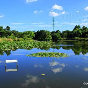 見沼自然公園で休憩を・・・さいたま市緑区♪