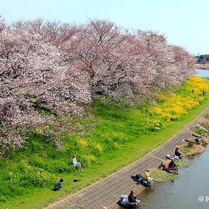 びん沼川で桜鑑賞・・・富士見市♪