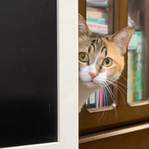 猫の日だから許される光景