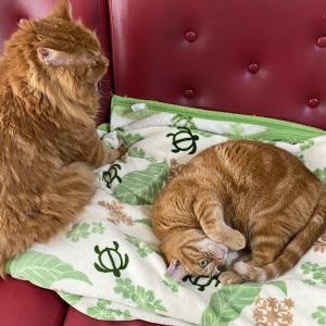 遥か彼方の猫団子の光景