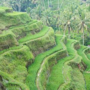 Tegallalang-2, Indonesia 〜映えスポットより、ローカルなライステラスへ~
