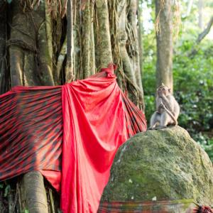 Ubud-2, Indonesia 〜ウブドで猿ざんまい!モンキーフォレスト&チャンプアンリッジウォーク~
