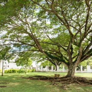 Guam-2, USA 〜静かなイパオビーチと巨木に遊ぶ、グアムの1日~