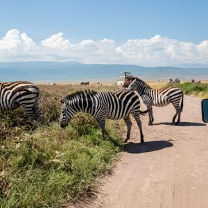 Ngorongoro, Tanzania 〜ワイルドな動物園!?ンゴロンゴロのサファリへ~
