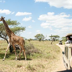 Serengeti, Tanzania 〜最後の楽園!?憧れのセレンゲティ・サファリで動物ざんまい~