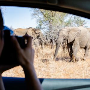 Kruger, South Africa 〜自分たちでドライブ!クルーガー国立公園のサファリへ~
