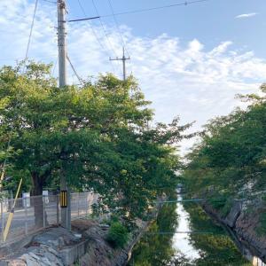 第2,751回(2020.8.11)早朝散歩から公文式築港新町教室まで無事一日を終える