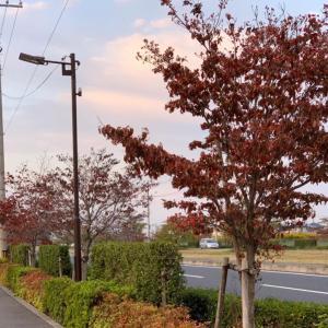 第2,829回(2020.10.28)早朝散歩で季節の変化を楽しむ♪