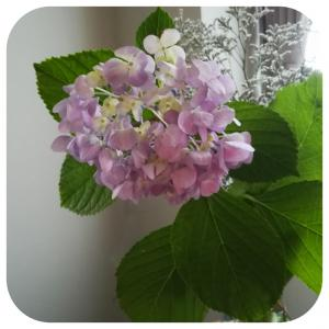 紫陽花が・・・