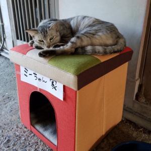 脱走した猫の探し方★