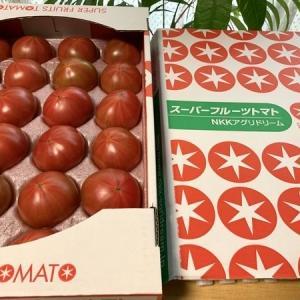 スーパーフルーツトマト2回目