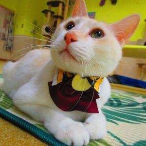 猫カフェの秋到来ニャ!遊びに行って何をしよー><