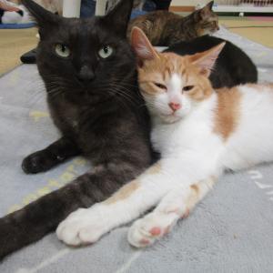 ネコからのテレパシー☆読み取るのにゃ!