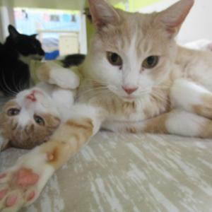 皆が猫に会いたくなる!キャッツフライデー到来