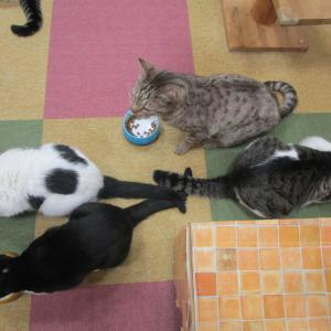 食っちゃ寝食っちゃね、メタボ猫予備軍はだれだ!?