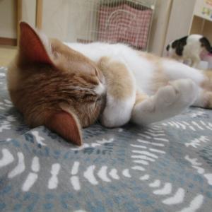 人生の休日が欲しい?毎日猫の日で祝日だー!