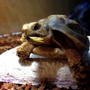 晩御飯おにく食べたい!